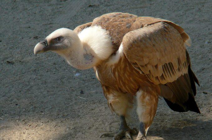Os fundos abutres