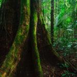 A Amazônia e o investimento estrangeiro2