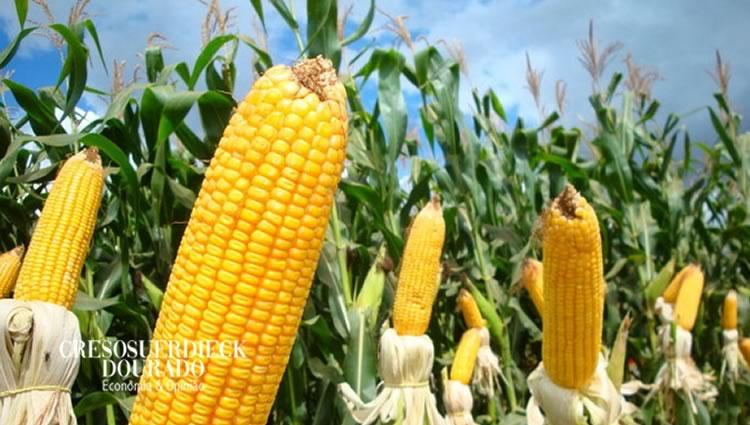 Commodities agropecuárias