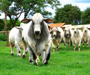 Mercado Carnes Aquecido